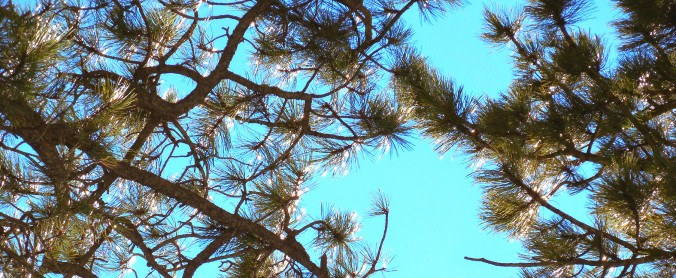 glitteringtrees1use