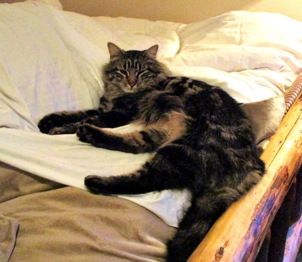 orviscat2use